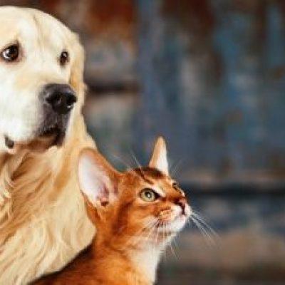Photo of ¿Cómo enfrentar cuarentena del Coronavirus con perros y gatos en casa?