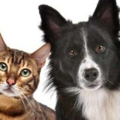 Photo of Mascotas no transmiten el coronavirus a los humanos